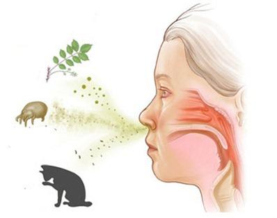 Вдыхание аллергенов