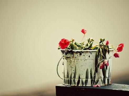 Засохшие цветы